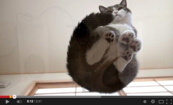 Cats From Below | www.petnook.in #petnook