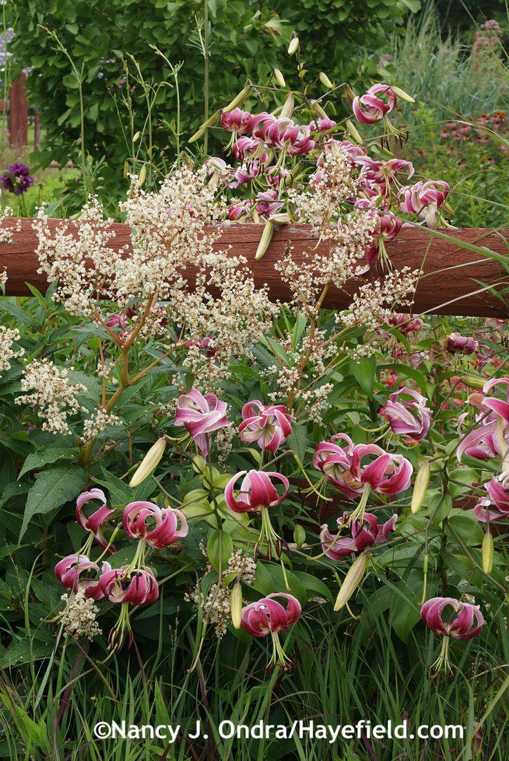 12 Best Hanham Court Images On Pinterest Beautiful Gardens Garden