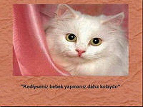 Мои смешные  котята ,смотри картинки смешные котята