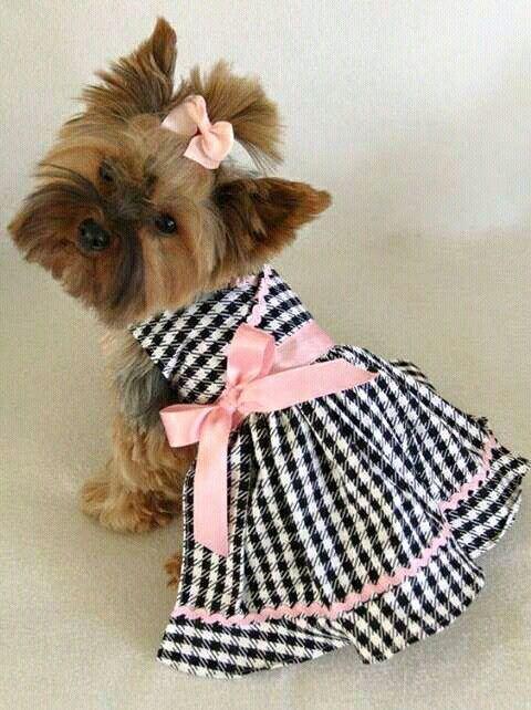 135 besten Tutus para perritas y gatos Bilder auf Pinterest   Hunde ...