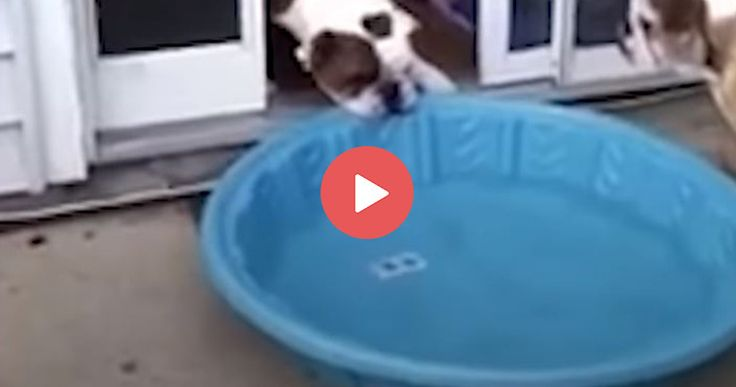 HILARIOUS dog wants to bring his pool in the house!   https://blog.entirelypets.com/pet-videos/dog-tries-bring-pool-house?utm_source=facebook&utm_medium=web&utm_campaign=epfbpostvvnew#utm_sguid=148622,3ff01fc7-f8aa-564c-3294-1478bef05338