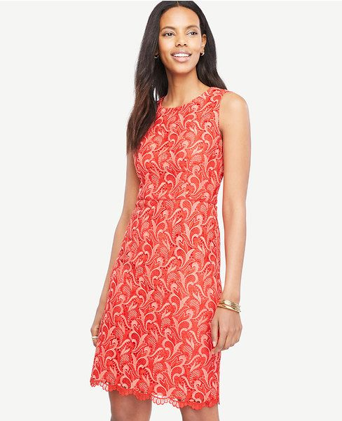 Primary Image of Two Tone Lace Sheath Dress