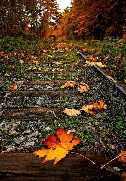 Большинство людей похожи на падающие листья; они носятся в воздухе, кружатся, но в конце концов падают на землю.