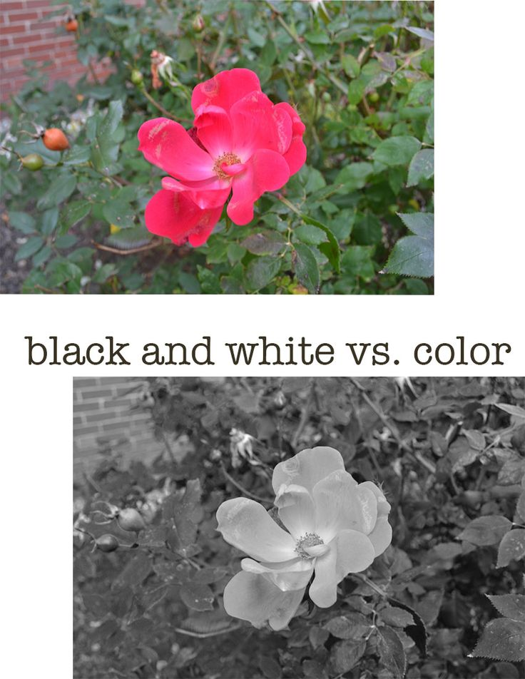 12 best images about Black and White vs. Color on ...