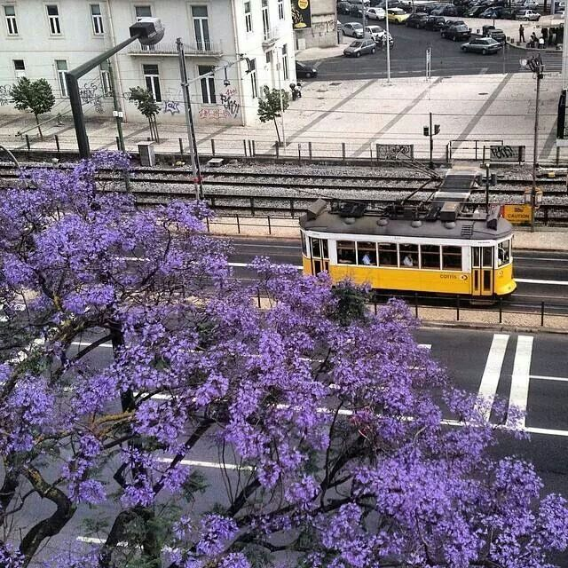 Lisbon in the spring. Courtesy of Lisboa live