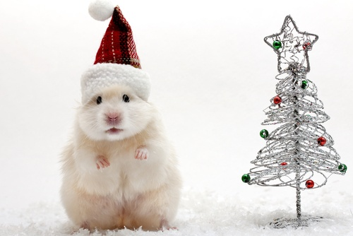 cute hamster in a Christmas hat