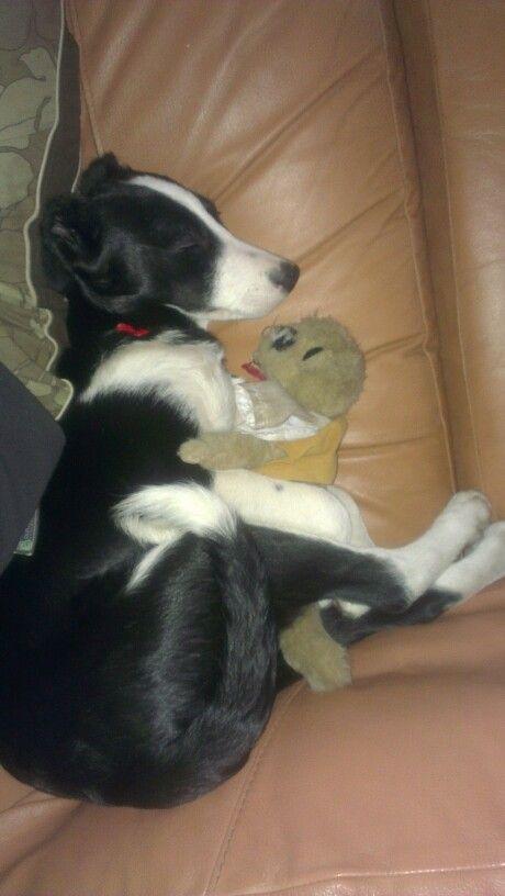 Post-hump sleep. Poor meerkat.