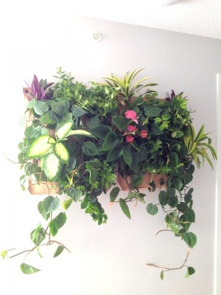 Living Walls | Greenstems
