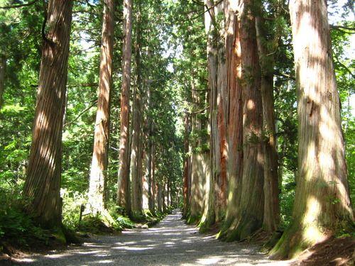 Shrine-Togakushi 戸隠神社奥社の参道杉並木