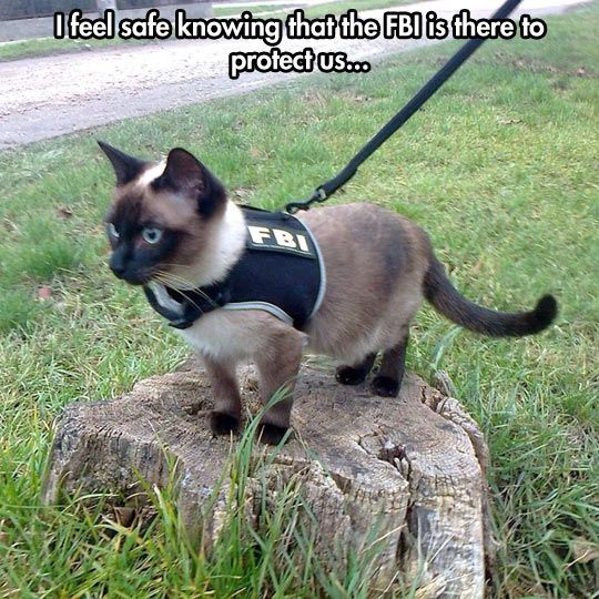FBI - I feel the fbi would due wonders employing cats. They are very versatile and would probably make excellent spies.
