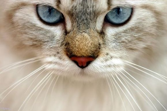 Pretty, but scary blue eyes~