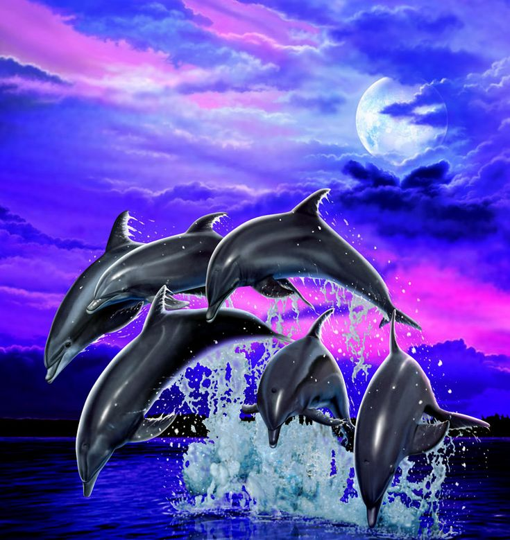 Moonlight Dolphins By Real Warner Find This Pin And More