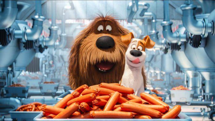 Pets A Cinematic Success Secret Life Of Pets Pets Movie Animal Pictures