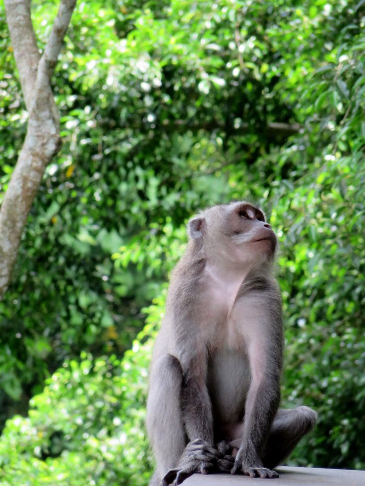In the Monkey Forest, Ubud, Bali