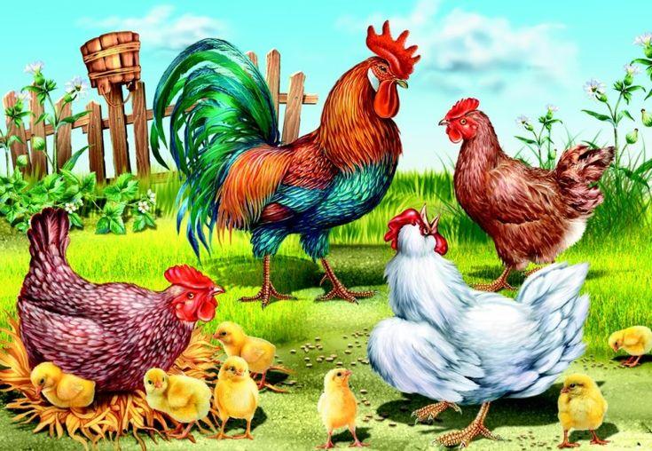 Картинка семья домашних птиц точки