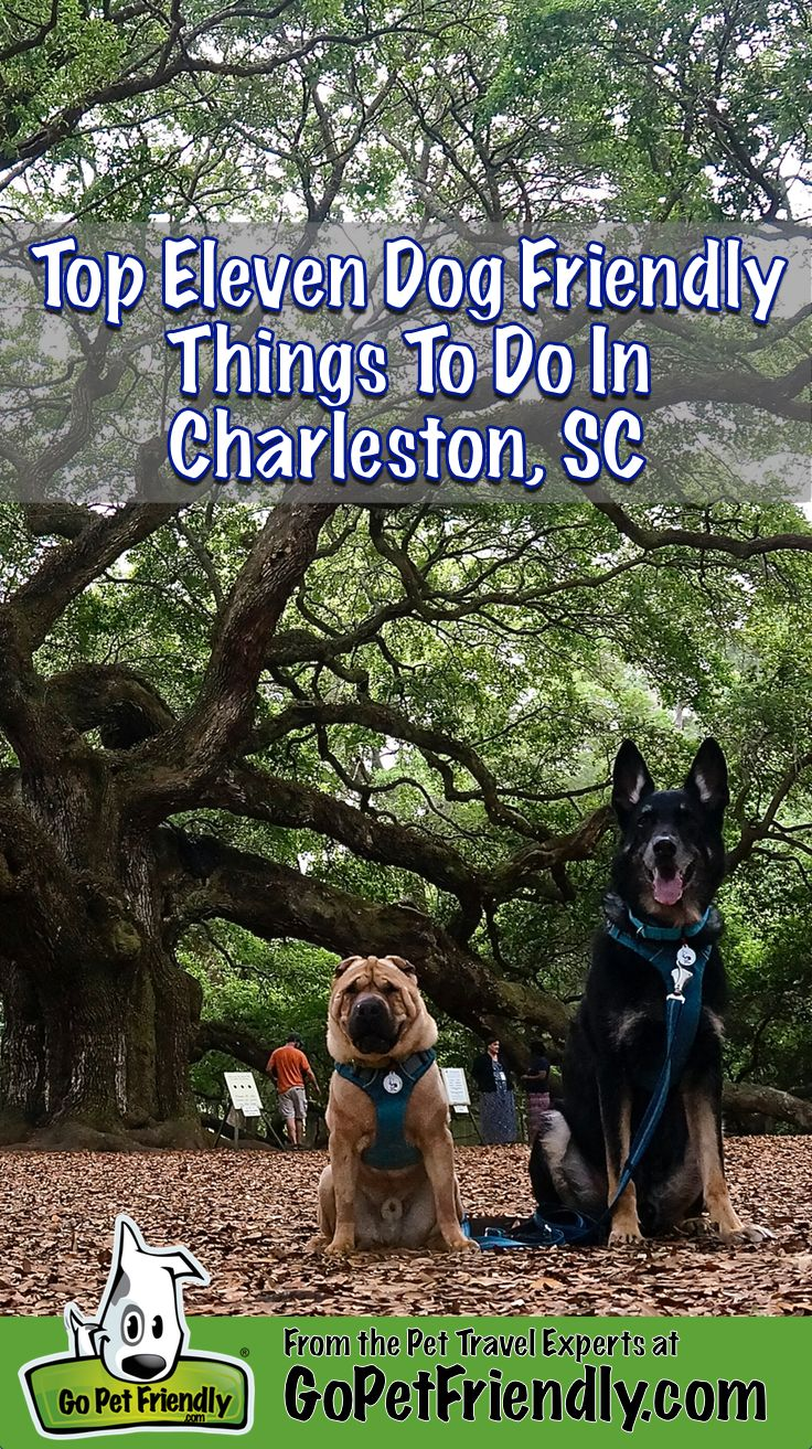 We've sniffed out the best dog friendly things to do in Charleston, SC!