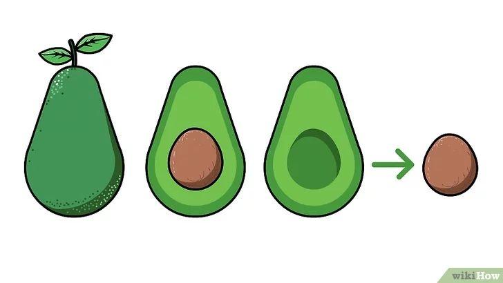 Bildtitel Plant an Avocado Tree Step 1