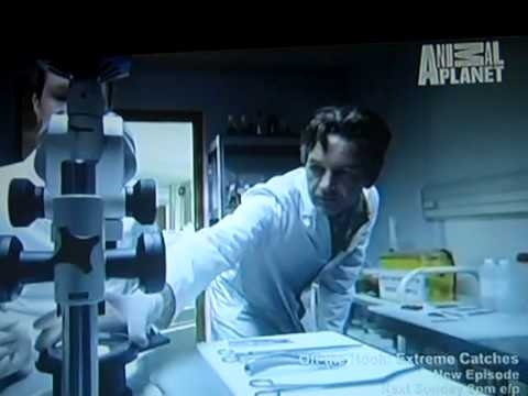 ANIMAL PLANET'S DOCUMENTARY - MERMAIDS: THE BODY FOUND Part 1 out of 9 - YouTube