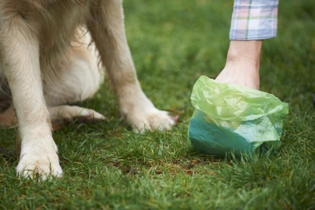 Did you know there's money to be made in becoming a pooper scooper? Find out what a dog waste removal business is all about.
