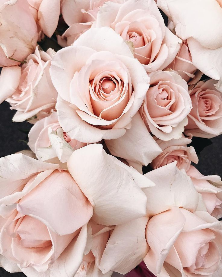 P I N T E R E S T Muriloguterres Pink Roses Background Pink Rose Bouquet Flowers Photography Wallpaper