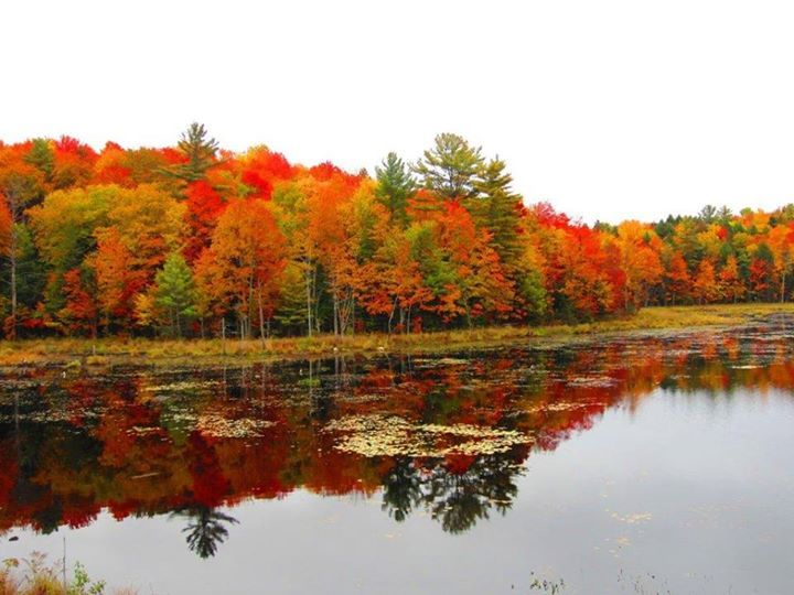 Autumn in Bracebridge Ontario