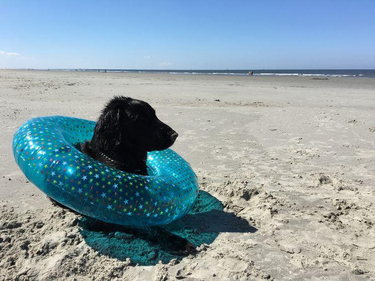 Met de hond op het strand van Schier