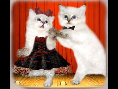 Музыкальный юмор. Кошачий вальс. Musical humor. Cat's Waltz. Music Serge...