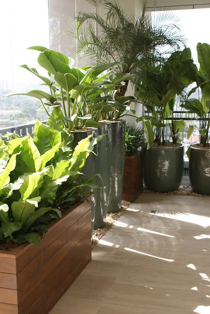 Using Plants For Balcony Privacy