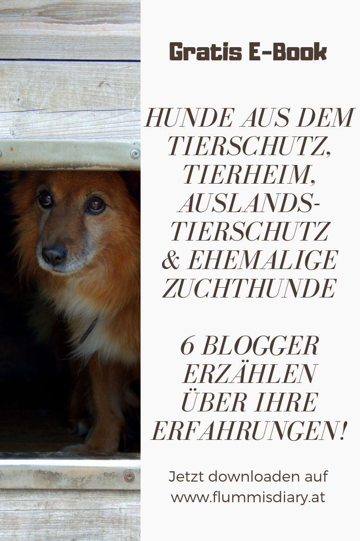 Hunde Mit Vergangenheit Kostenloses E Book Zum Download Flummi S Diary Tierheim Hunde Tierschutz Hunde Hunde Aus Tierheim