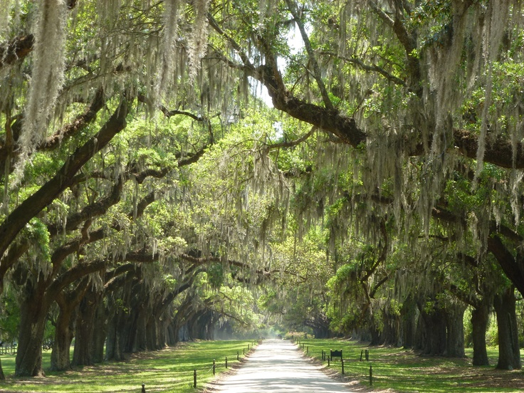 Avenue of the Oaks Boone Hall Plantation.  One of the most beautiful places I have ever been.