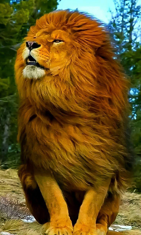 Animals Lovers Lovinganimals Dg Instagram Posts Videos Stories On Webstaqram Com Animals Beautiful Majestic Animals Animals Wild
