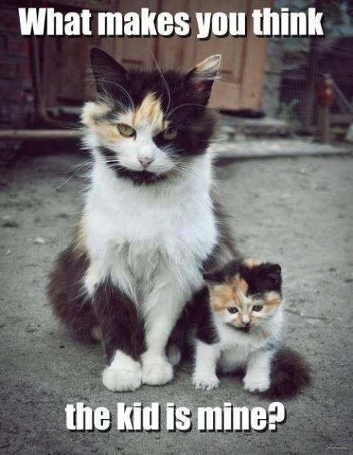 Calico Mommy and baby cat...hilarious!!!