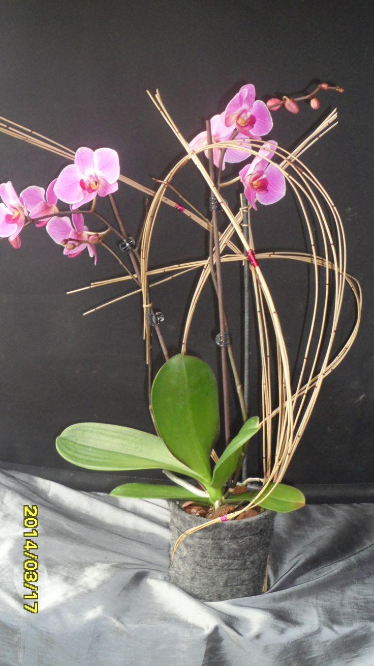 orchidée habillée ....