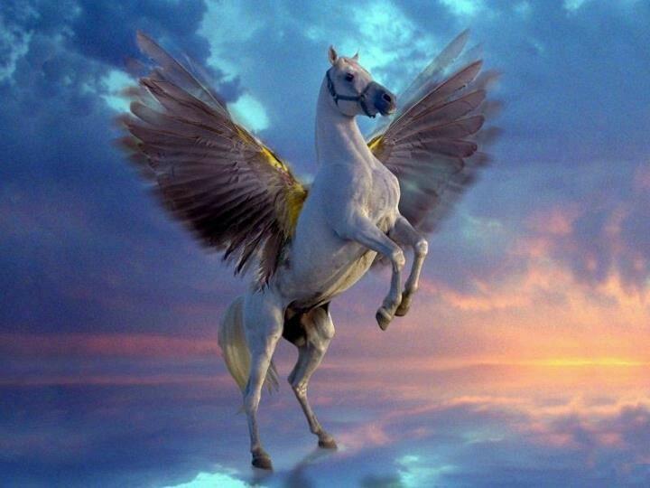 Flying horse | Unicorns/Flying Horses/Fantasy/Mystical ...