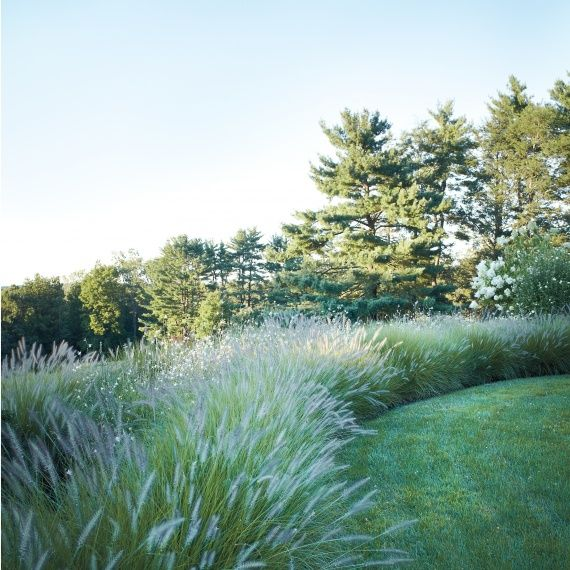 The gossamerlike grass hedge is anchored by Pennisetum 'Hameln,' with butterfly-like Gaura 'Whirling Butterflies' fluttering through.