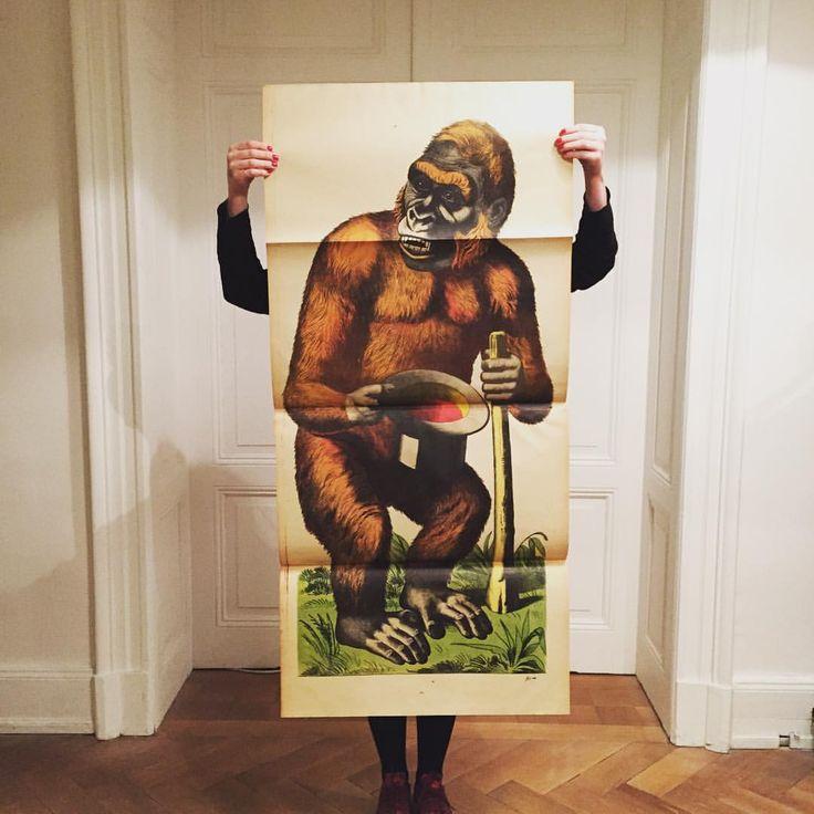Gorilla - Lithographie Wentzel - Imagerie de Wissembourg - Fin 19ème siècle