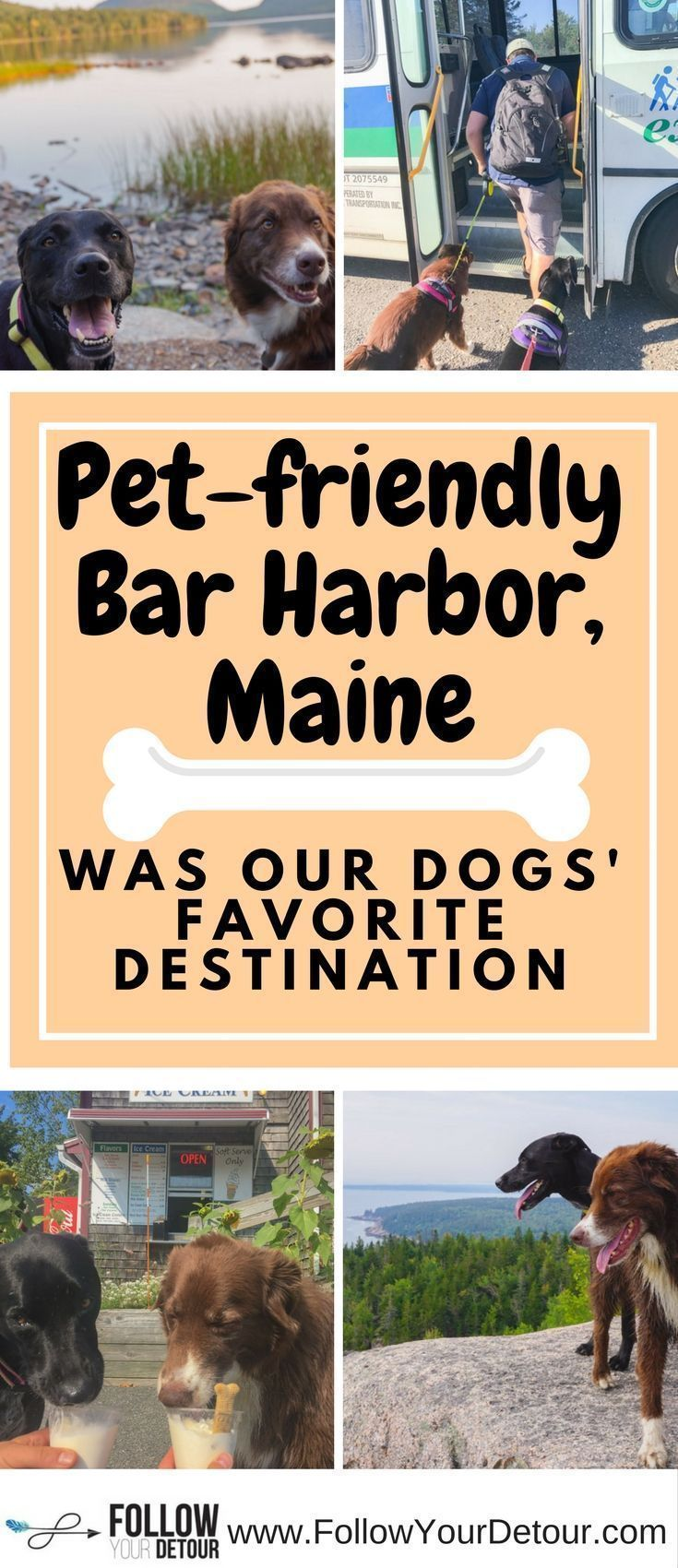 Take your dogs on vacation to Bar Harbor, Maine and they will love you forever! They are allowed on city buses, boats, and in many restaurants! Bar Harbor is very pet friendly. Our dogs love RV living and camping and its extra special finding #petfriendly #rvvacation