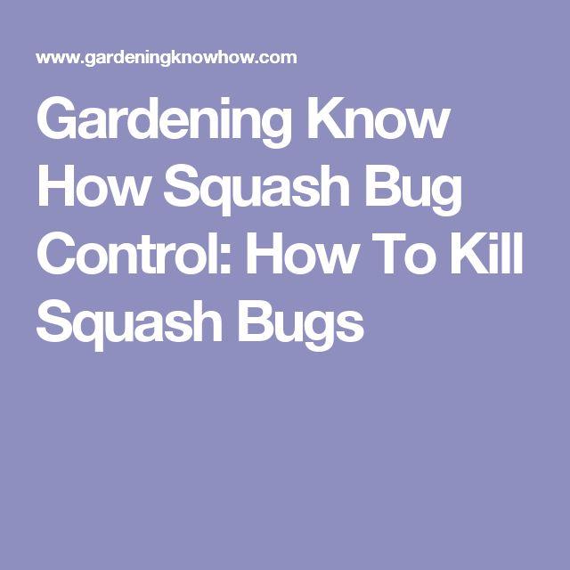 Gardening Know How Squash Bug Control: How To Kill Squash Bugs