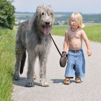 The Most Adorable Picture I Have Ever Stumbled Upon. I Am Having A Hard Time Determining Who Is Cuter! This Irish Wolfhound Is Adorable And That Little Boy With The Blonde Locks Is Just Precious.