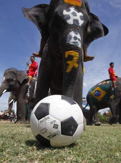 Elephant world cup!