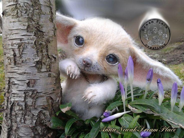 #fennec #fox #cub #ooak #handmade #realistic #needle #felted  #felting #felt #rękodzieło #anna #nowak #dreamplace #dream #place #critters