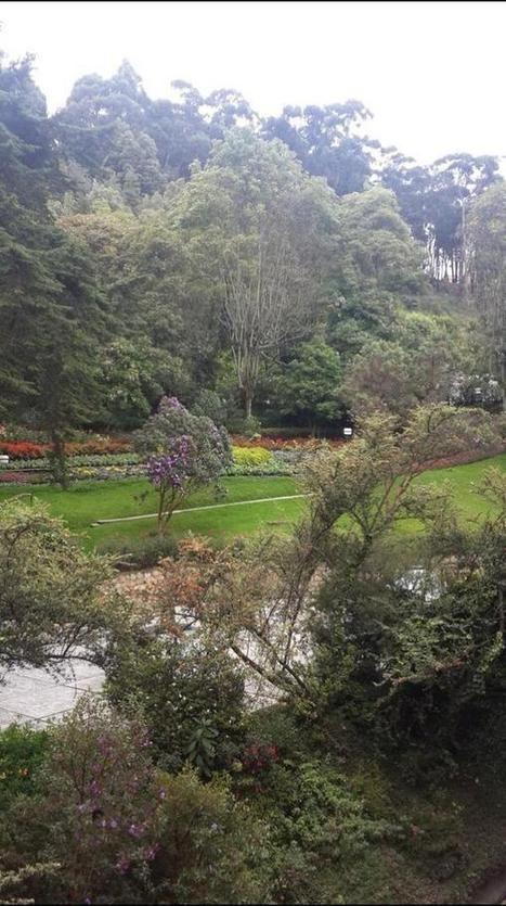Uno de los lindos jardines de la @Universidad Externado de Colombia Al fondo el árbol del #sietecueros @Roberto Hinestrosa @soyfigri @FIGRIEXTERNADO | Tweet from @Ursula De Hinestrosa | SEO Ursula Sola | Scoop.it