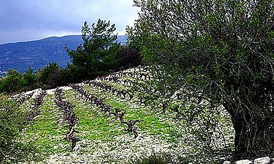 You may not know that the warm Mediterranean nation of Cyprus produces some fantastically unique wine. Here is our guide to enjoying it for yourself.