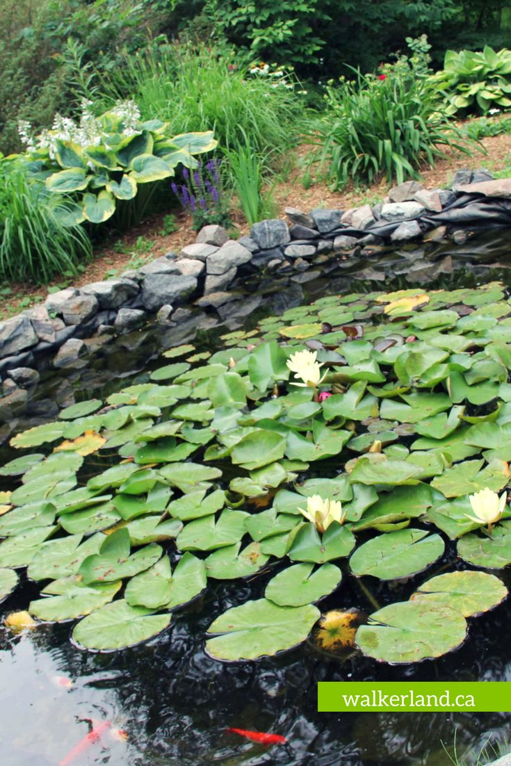 60 best images on pinterest lotus flower aqua and bellis a garden pond provides nutrients for your vegetable garden water catchment a habitat for beneficial insects and a relaxing environment mightylinksfo