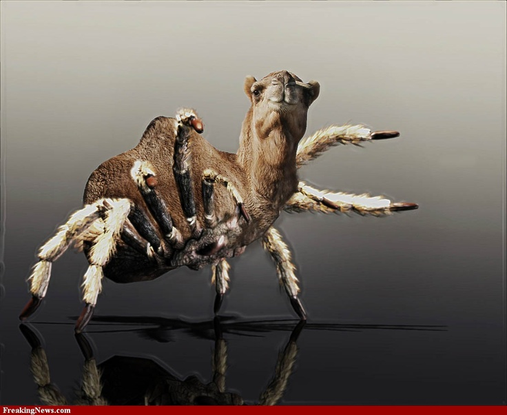215 Best Spiders Images On Pinterest