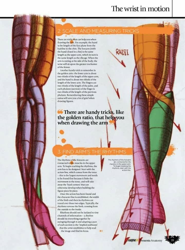 Anatomy | Artsy