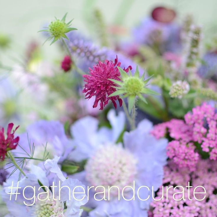 It's the 1st of August already!!! To celebrate I'm hosting a hashtag competition #gatherandcurate - please join in and have fun by submitting your photos of flowers or things from the great outdoors gathered and then curated for your image - remember to add #gatherandcurate @mossandstoneuk to your caption - entries taken until Sunday midnight - winner will be revealed next Monday! Do please join in have fun and get creative - can't wait to see your photos! #gatherandcurate #mossandstoneuk…