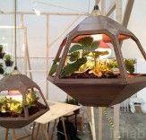 Vicky Pendant Lamp Terrarium Shines a Light on Indoor Gardening | Inhabitat - Sustainable Design Innovation, Eco Architecture, Green Building