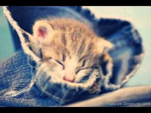 Cute Baby Kitten Clips - TOP 10 Video Compilation 2015 NEW https://www.youtube.com/watch?v=yNBk22m1gYY&list=PLC_HjotBFMpOoi_SKE7HoU9skczRCv8aM