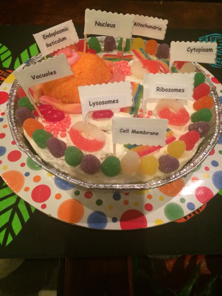 animal cell edible project Jello animal cell we are greatly and then made an edible animal cell model my kid is doing something like this for a school project ( 6th grade.